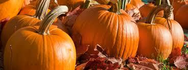 Happy National Pumpkin Day!
