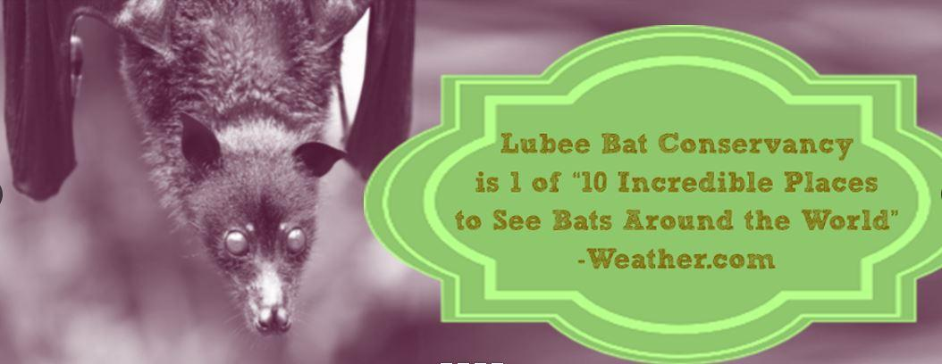 The Lubee Bat Conservancy